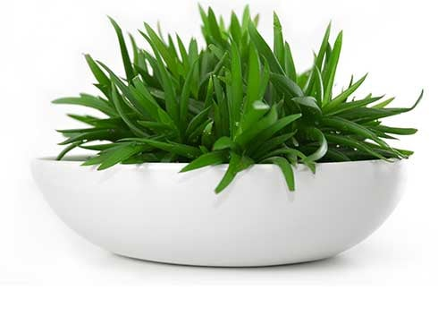 Plant in white bowl